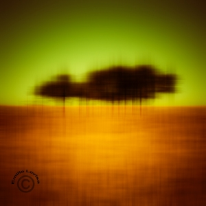 Ultra modern photographic art of trees in a wheat field – would look stunningly delicious as a large metal print.